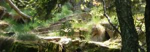 Naturtherapie ist Selbsterkenntnis durch Naturerfahrung