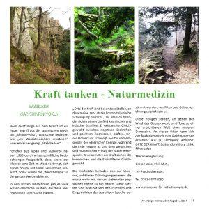 Waldbaden stärkt das Immunsystem