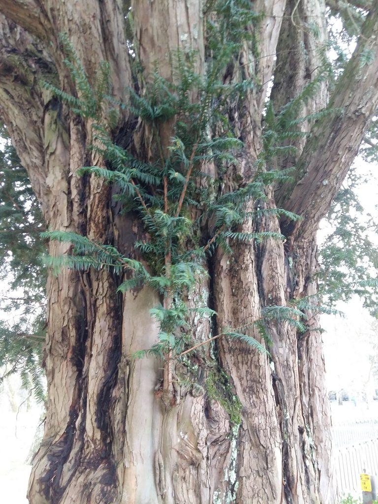 Naturtherapie bei Lebenskrisen mit einem Baum im Park.